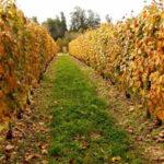 La tradición del vino uruguayo atesora calidad